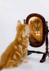 leo-cat